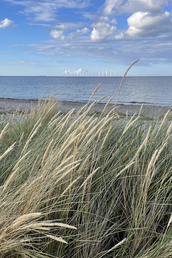 The dunes of Amager Beach with the sea in the background and a cloudy but sunny sky.